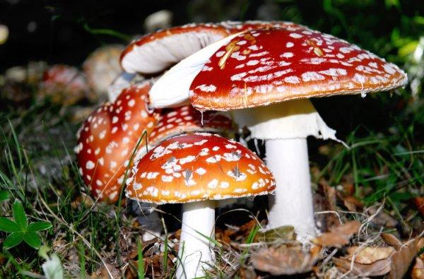 Medicine con urea da un fungo