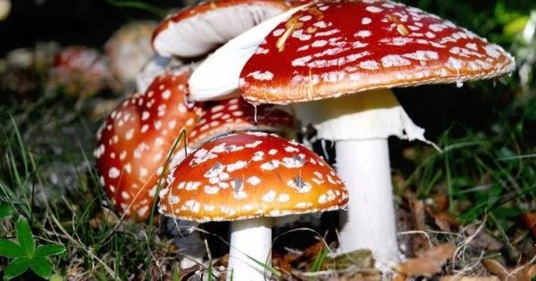 Le proprietà nutrizionali dei funghi