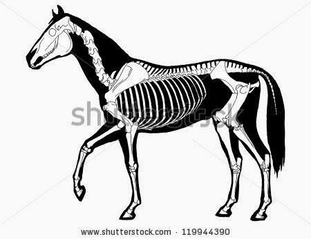 Anatomía Artística: Anatomía animal - El caballo