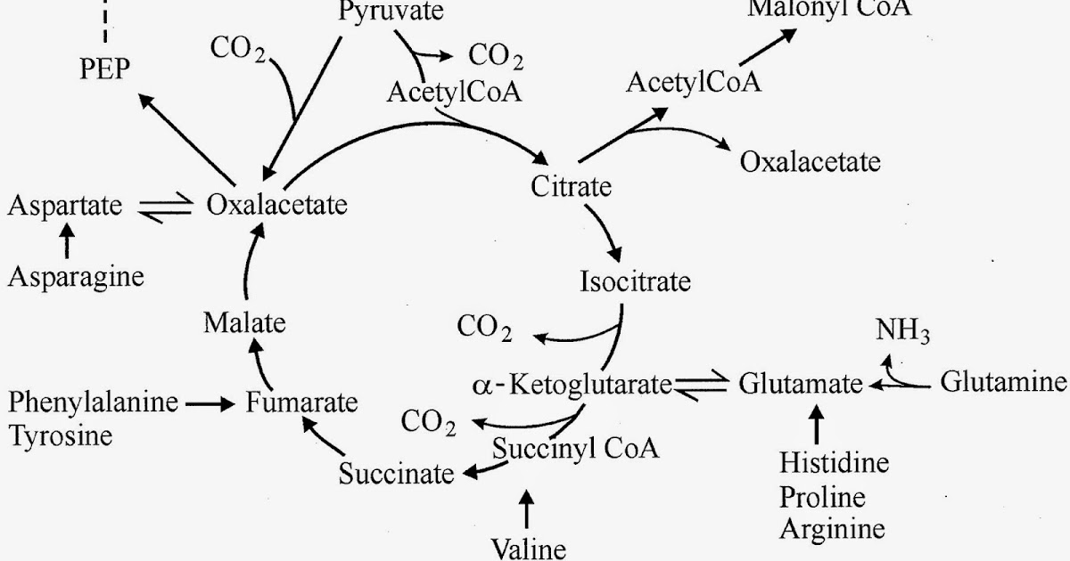 The High-fat Hep C Diet: Gluconeogenesis Drives Ketogenesis - role of the Nutritional Prometheus.
