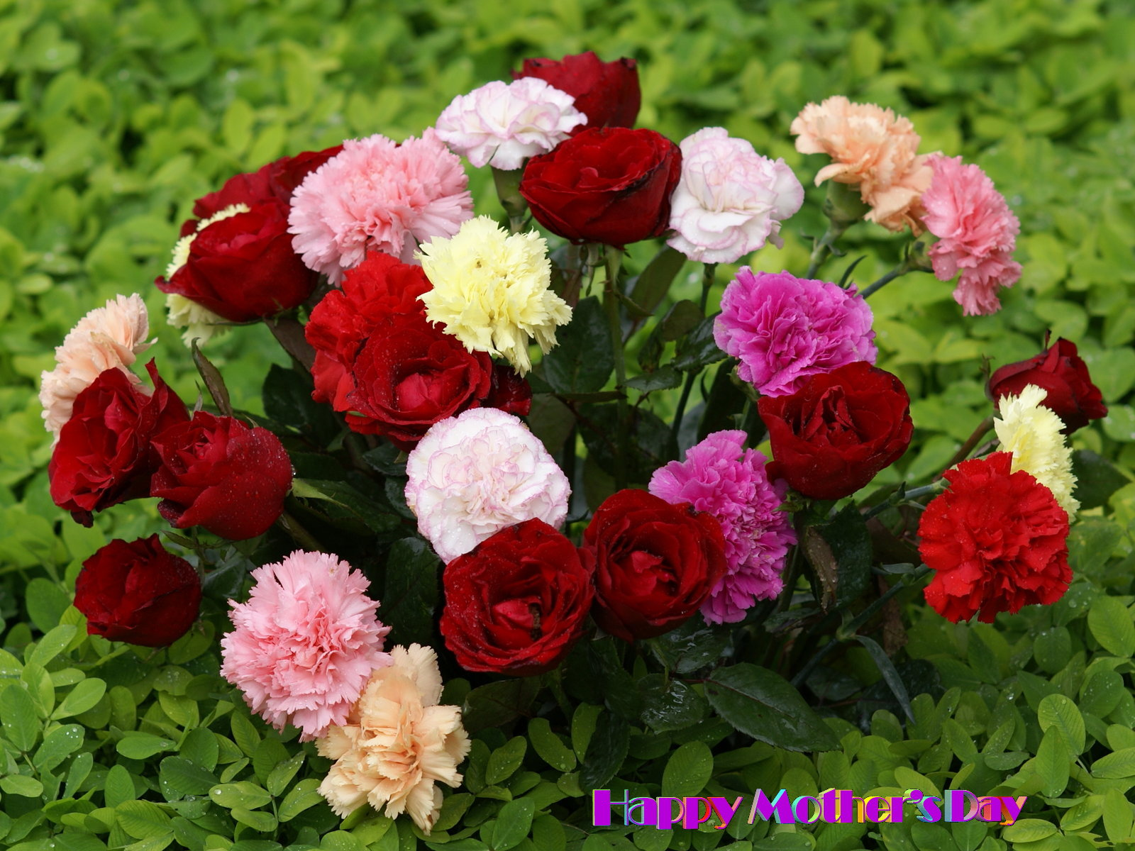 Gulab Flower Hd Top 10 white flowers hd