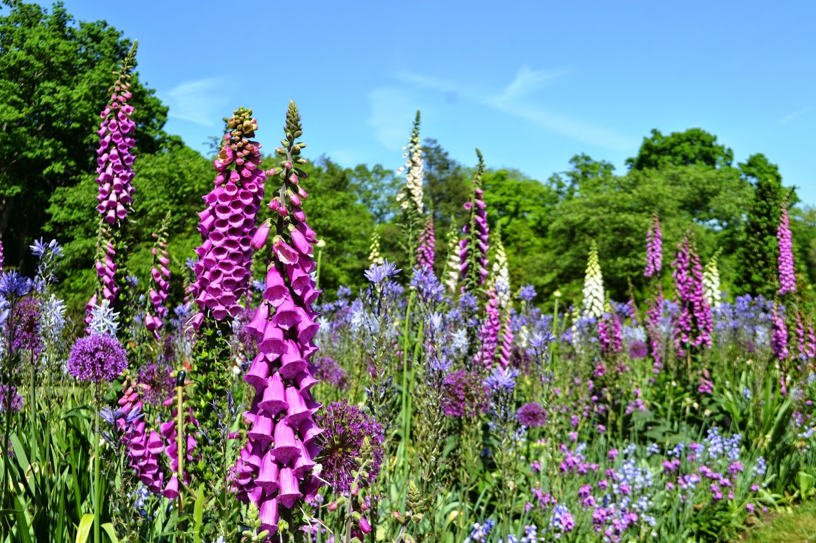 Its All About Purple: Longwood Gardens