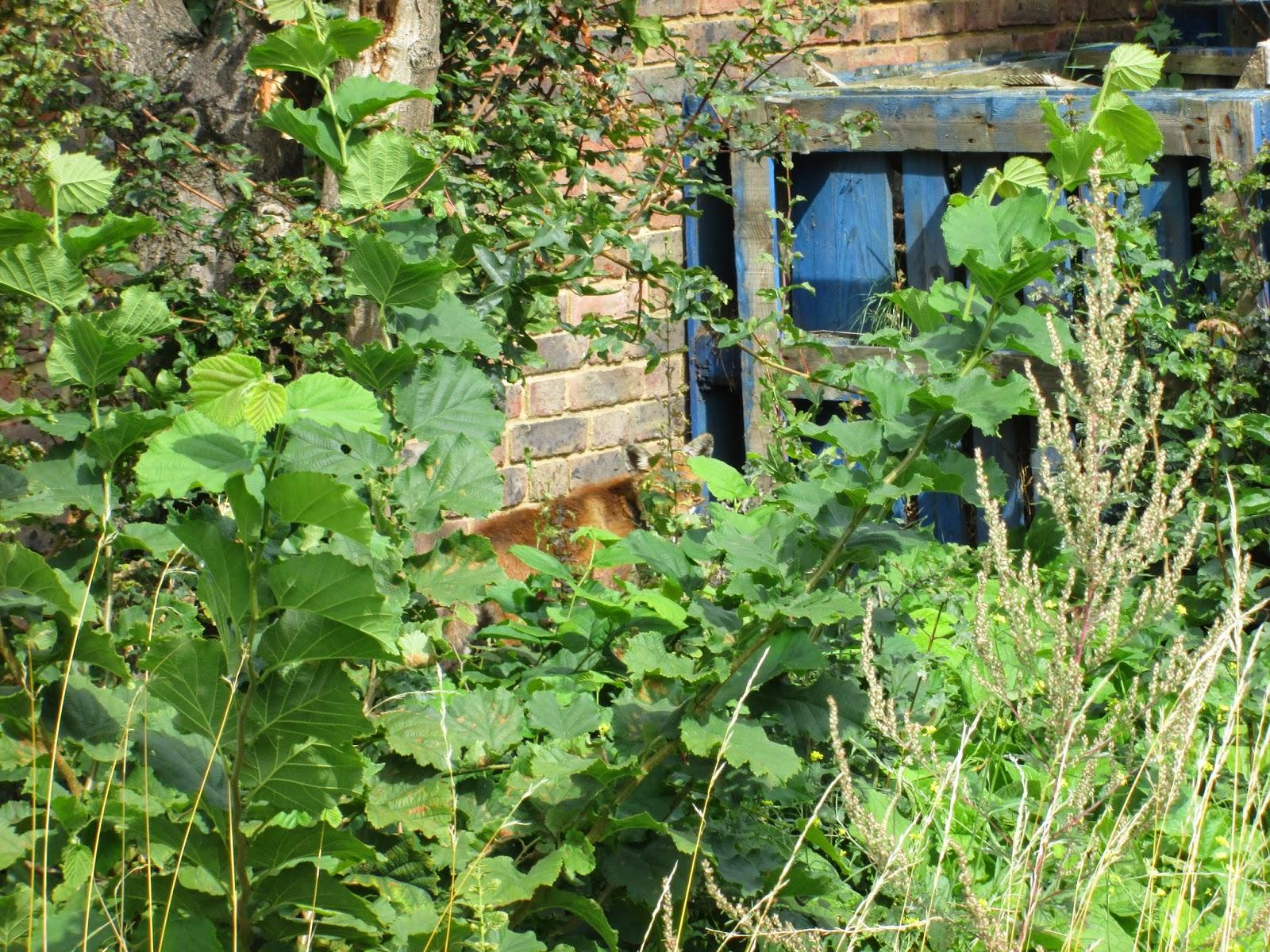 Watch this space: Enter the secret Garden.