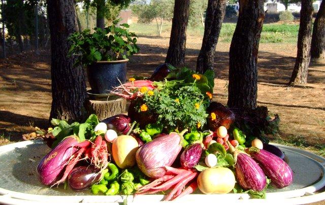 Salud la voz de carmona la asociaci n vida ofrece - Luz de vida productos ecologicos ...