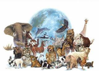 Las imágenes de las 100 especies más amenazadas del  - imagenes de animales en peligro