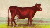 Antique-Advertisement-Graphics-Cow-Image