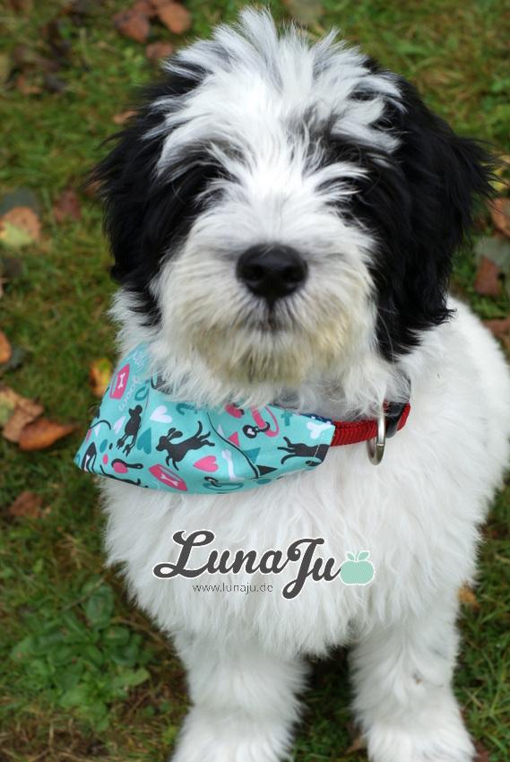 Stoff und Liebe Blog: *** Tutorial Halstuch für Tierhalsband