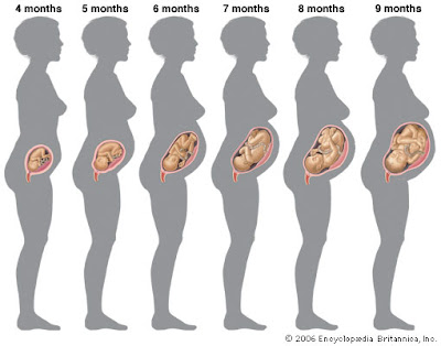 20 facts about being pregnant