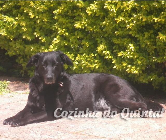 Lola no Quintal (Da Cozinha!)