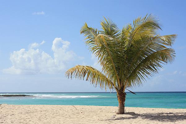 Weisser Sandstrand, Palme und türkises Meer