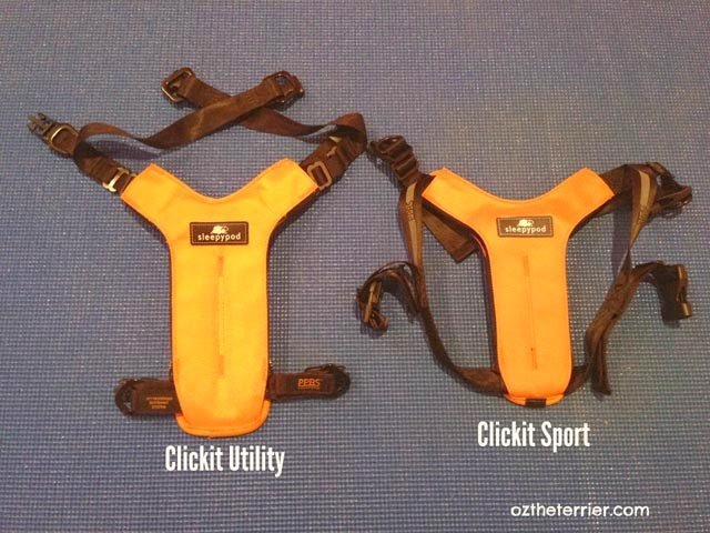 Oz the Terrier comparing size of Sleepypod's Clickit Utility Harness & Clickit Sport Harness