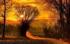 ~ AUTUMN SUN MUSINGS ~