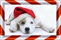 Picture of dog in Santa hat