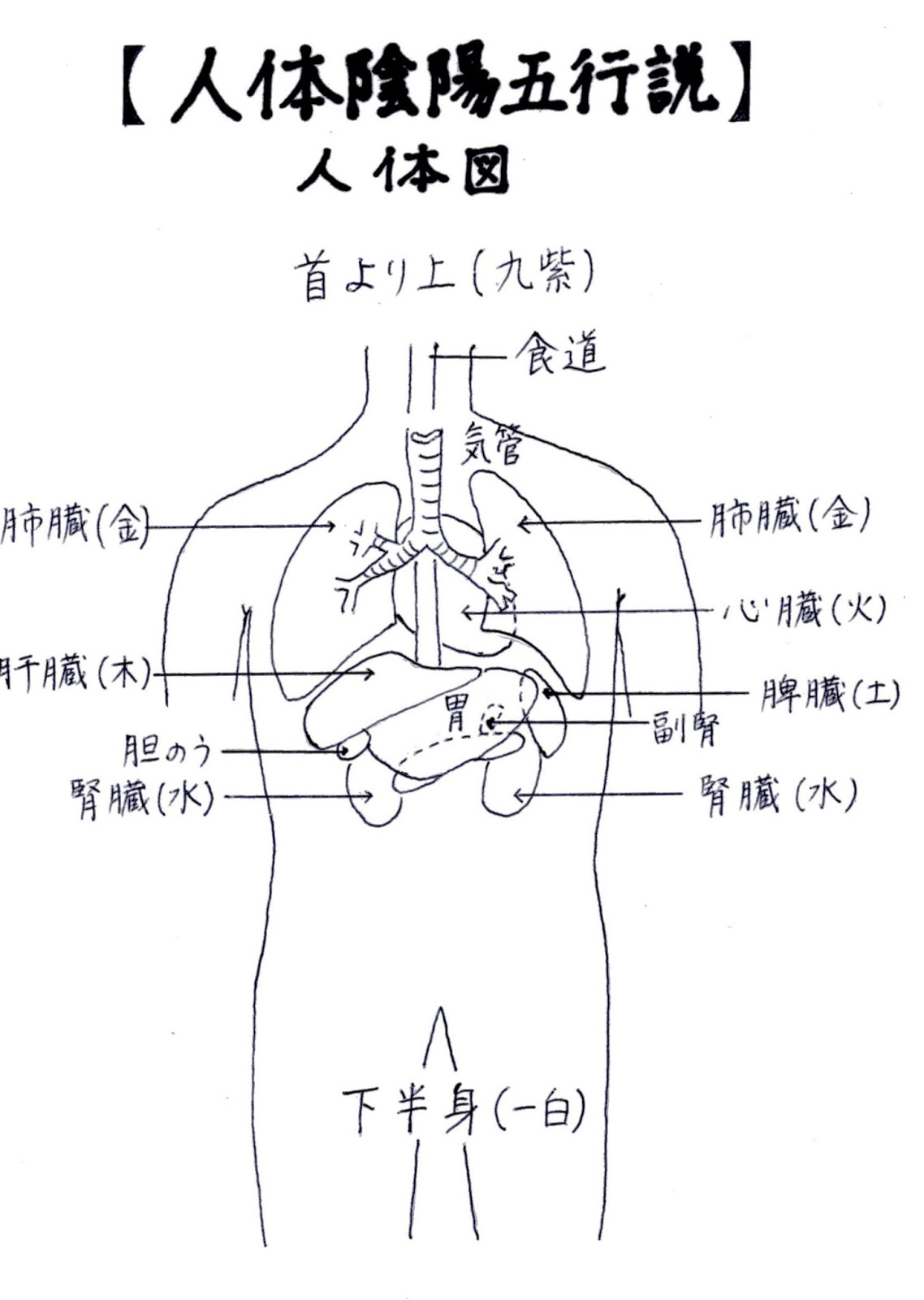 人体陰陽五行説,木火土金水,家宝,五臓六腑