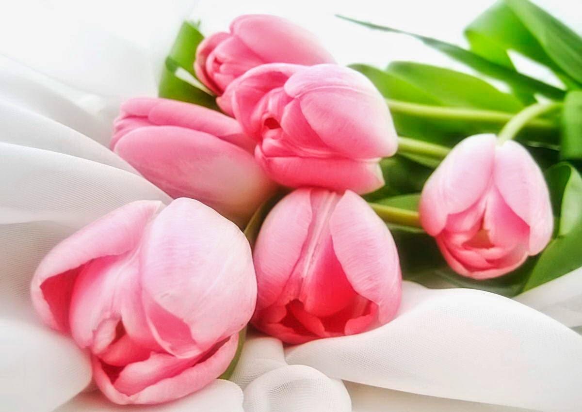 cute tulips pink flowers - photo #30