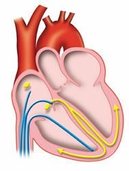 http://www.solaece.org/paciente/estudio.html#4