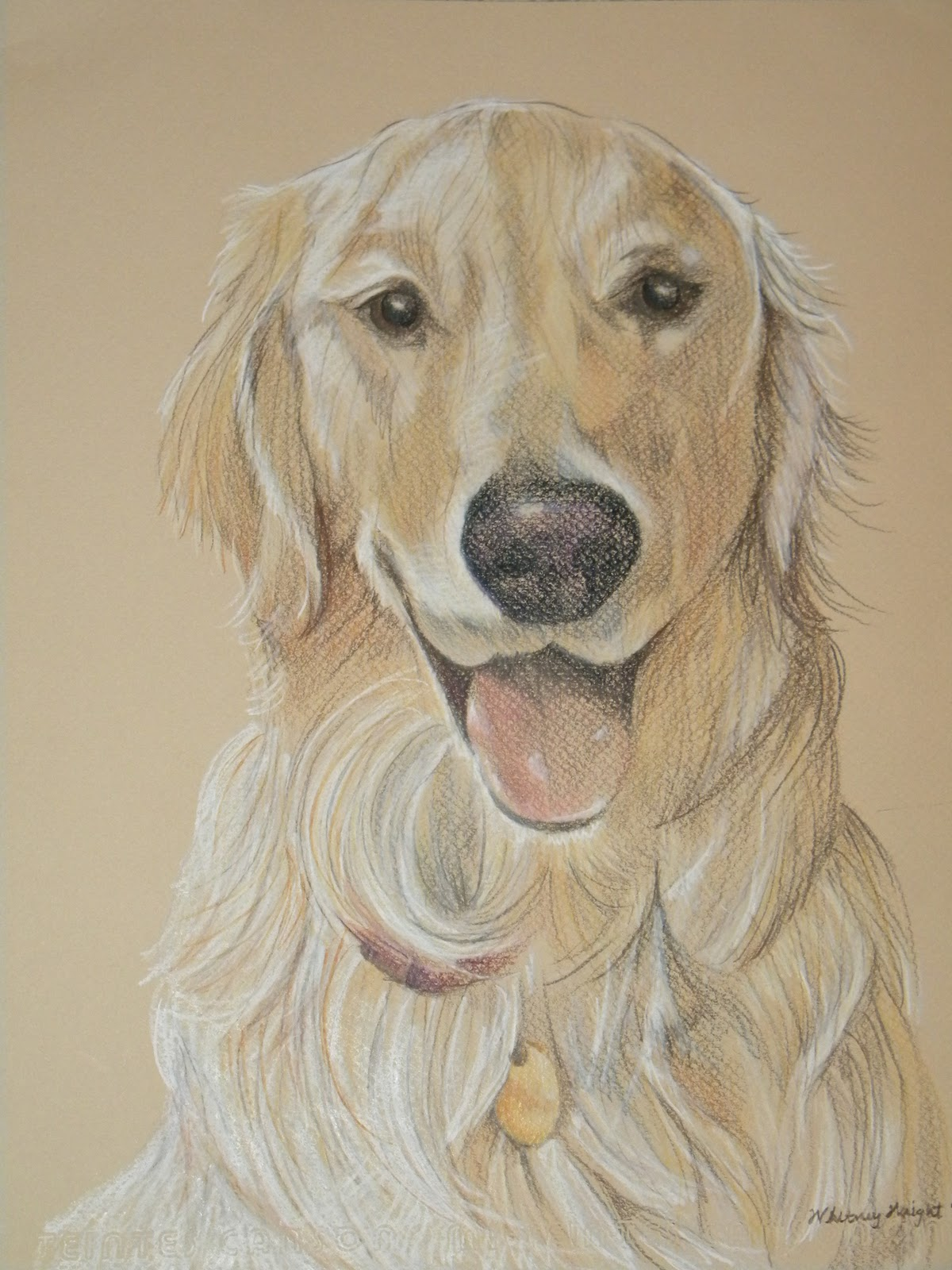 Line Drawing Golden Retriever : The gallery for gt golden retriever line drawing