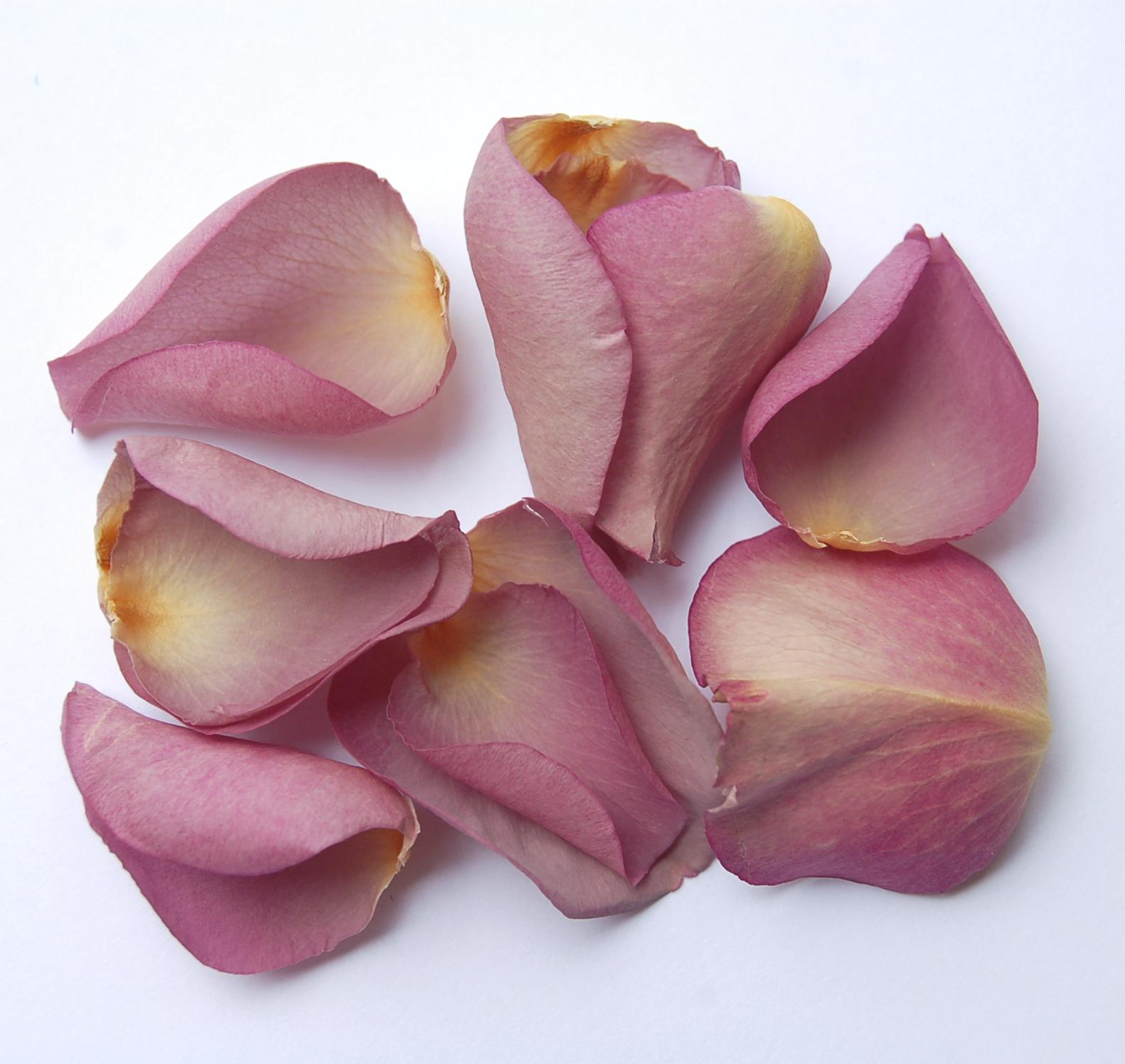 The Confetti Blog Rose Petal Wedding Confetti From The
