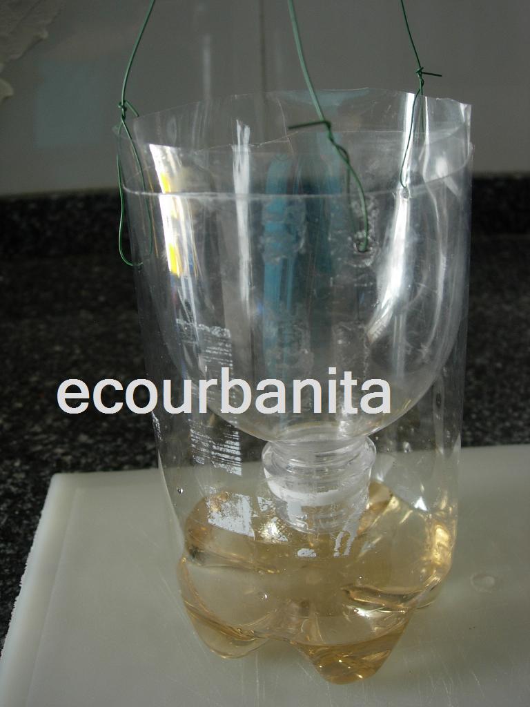 Ecourbanita insecticida casero contra hormigas moscas y - Que hacer contra las cucarachas ...