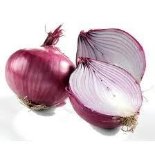Onion (Allium cepa L.)