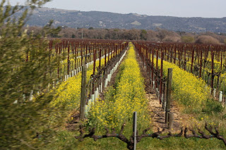 wildflowers vineyards arnold drive sonoma