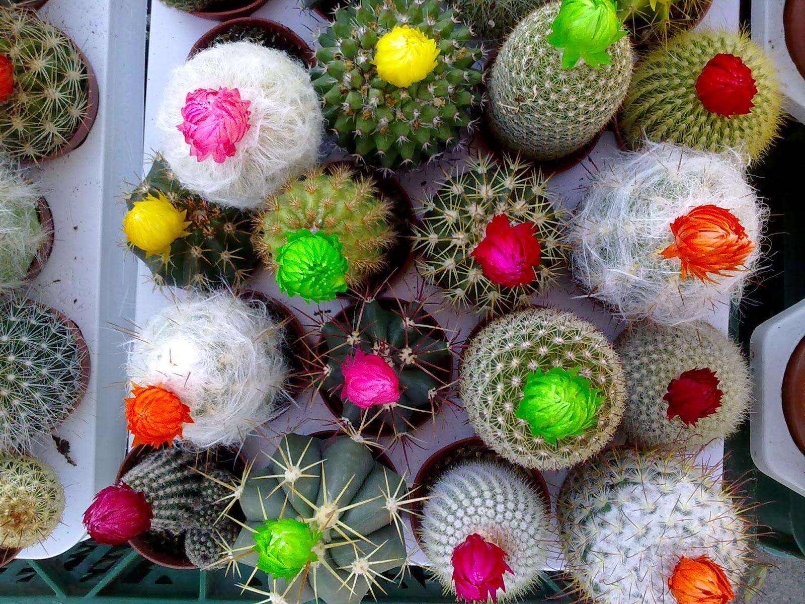 Que plantas poner en el interior de mi casa - Cactus raros fotos ...