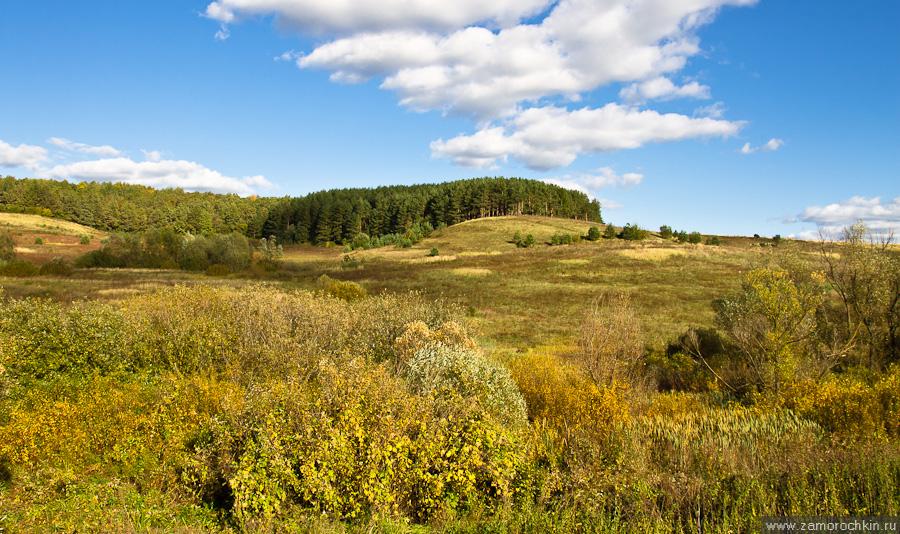 Осенний пейзаж. Опушка леса.