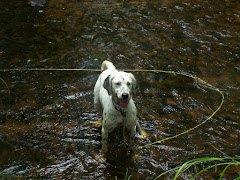 Holly in fav watering hole
