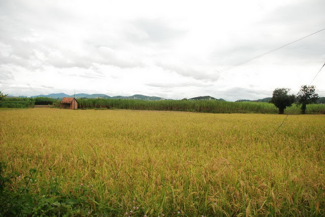 Kontum paysage