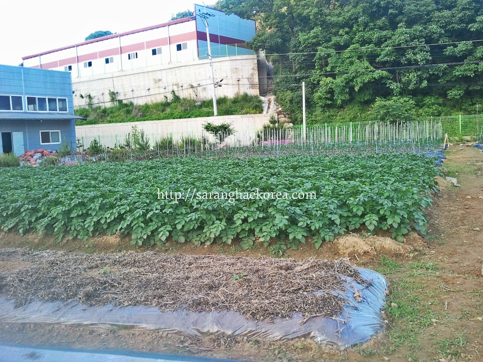 Korean Landscape Garden : Saranghae korea farming ideas in that we should imitate