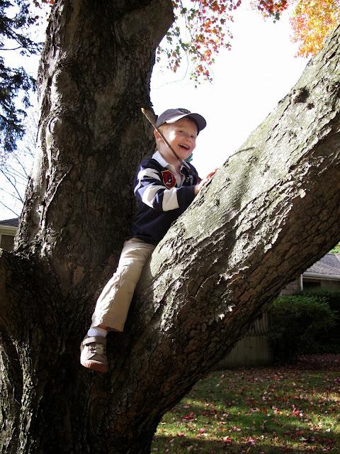 Tree Climbing Porter