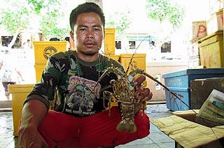 Cari Lobster, Nelayan Menantang Maut