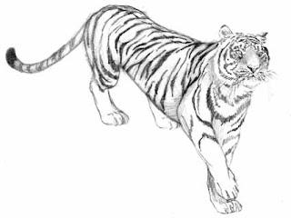 fotos de Tatuagens de Tigres