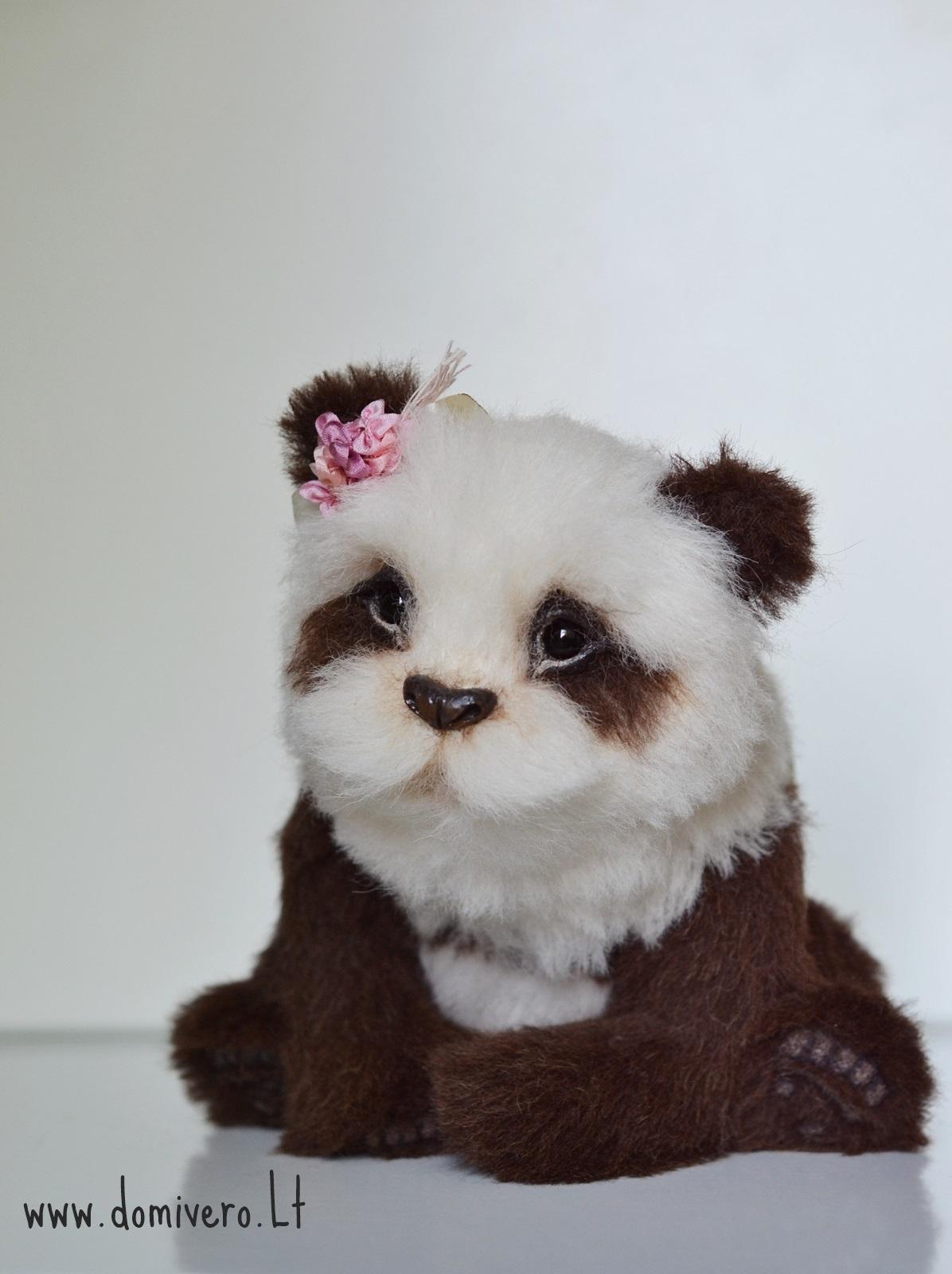 Panda Quizai