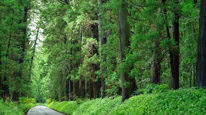 La avenida Cedar de Nikko, la avenida arbolada más larga del mundo