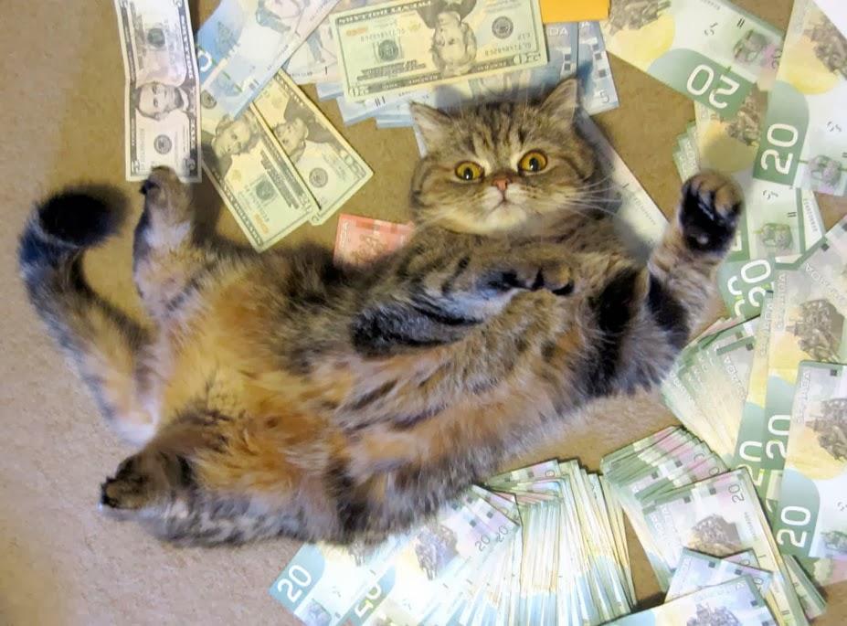 How To Make Money Cat Instagram