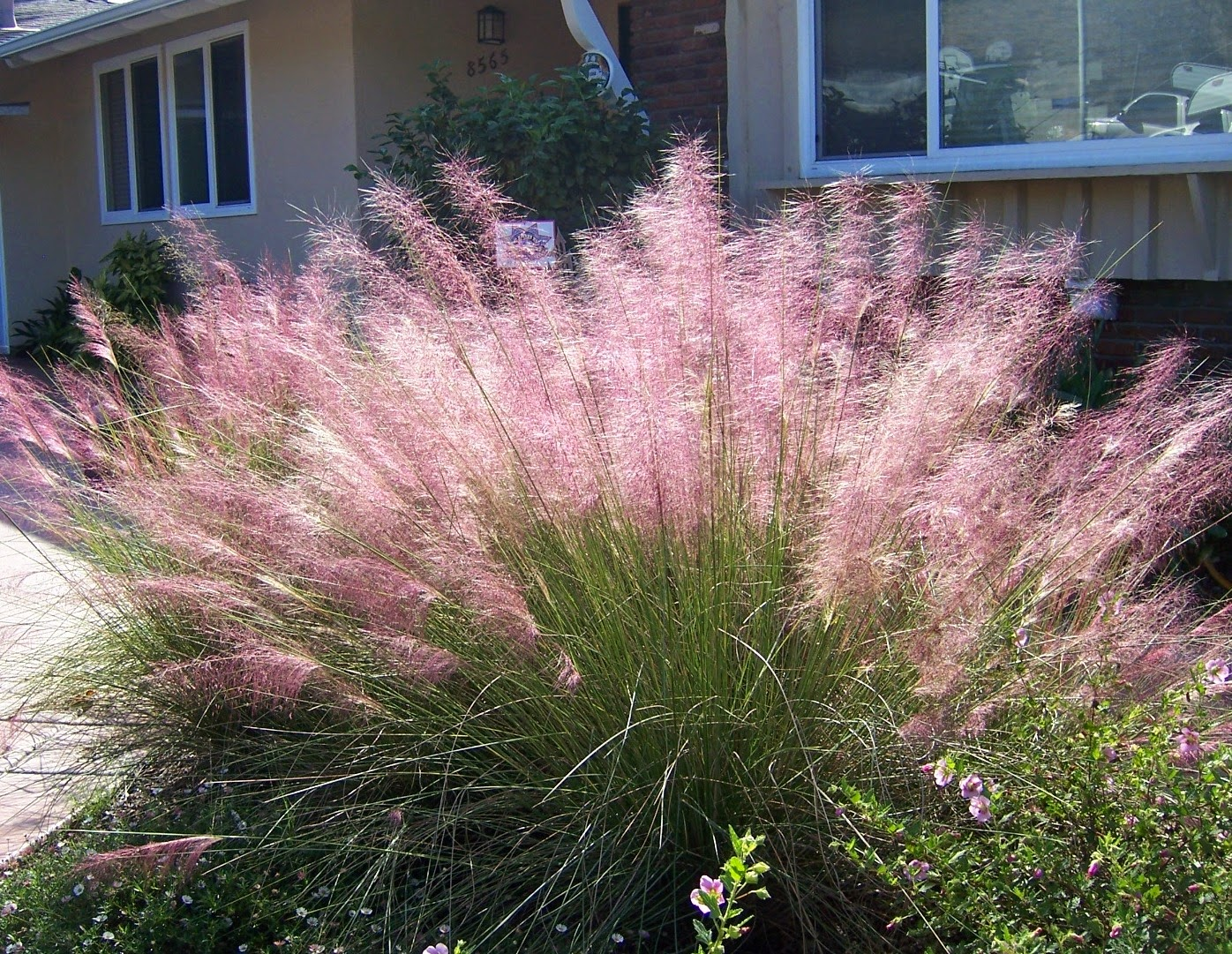 Try a container of ornamental grasses cozy little house for Ornamental grass with pink flowers