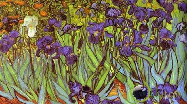 Irises oleh Vincent Van Gogh