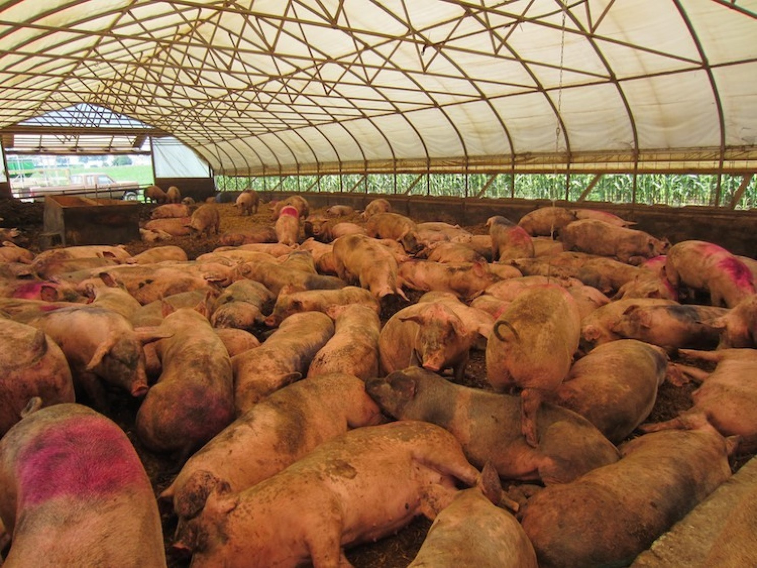 is factoy farming cruel to animals Farmed animals and the law aldf files cutting-edge lawsuits to fight abuses at factory farms oregon's felony animal cruelty law.