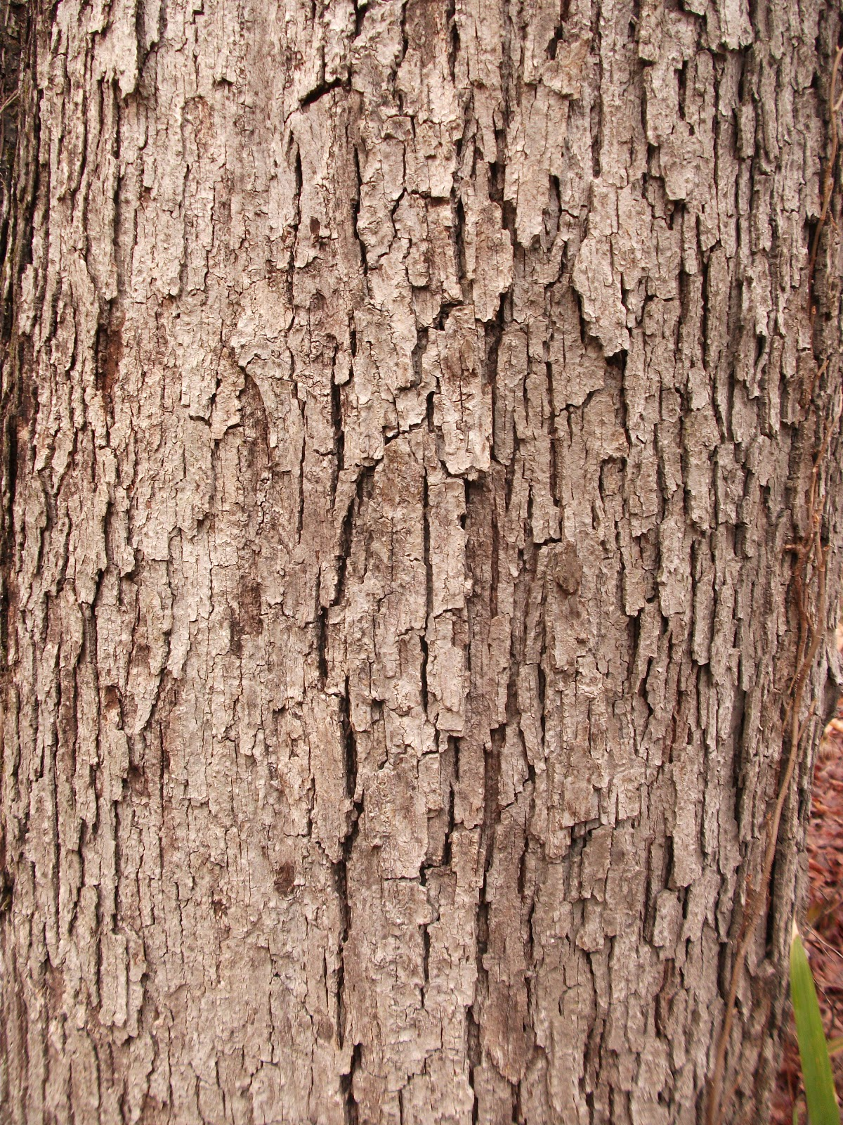 Wonderland Woods: Tree...