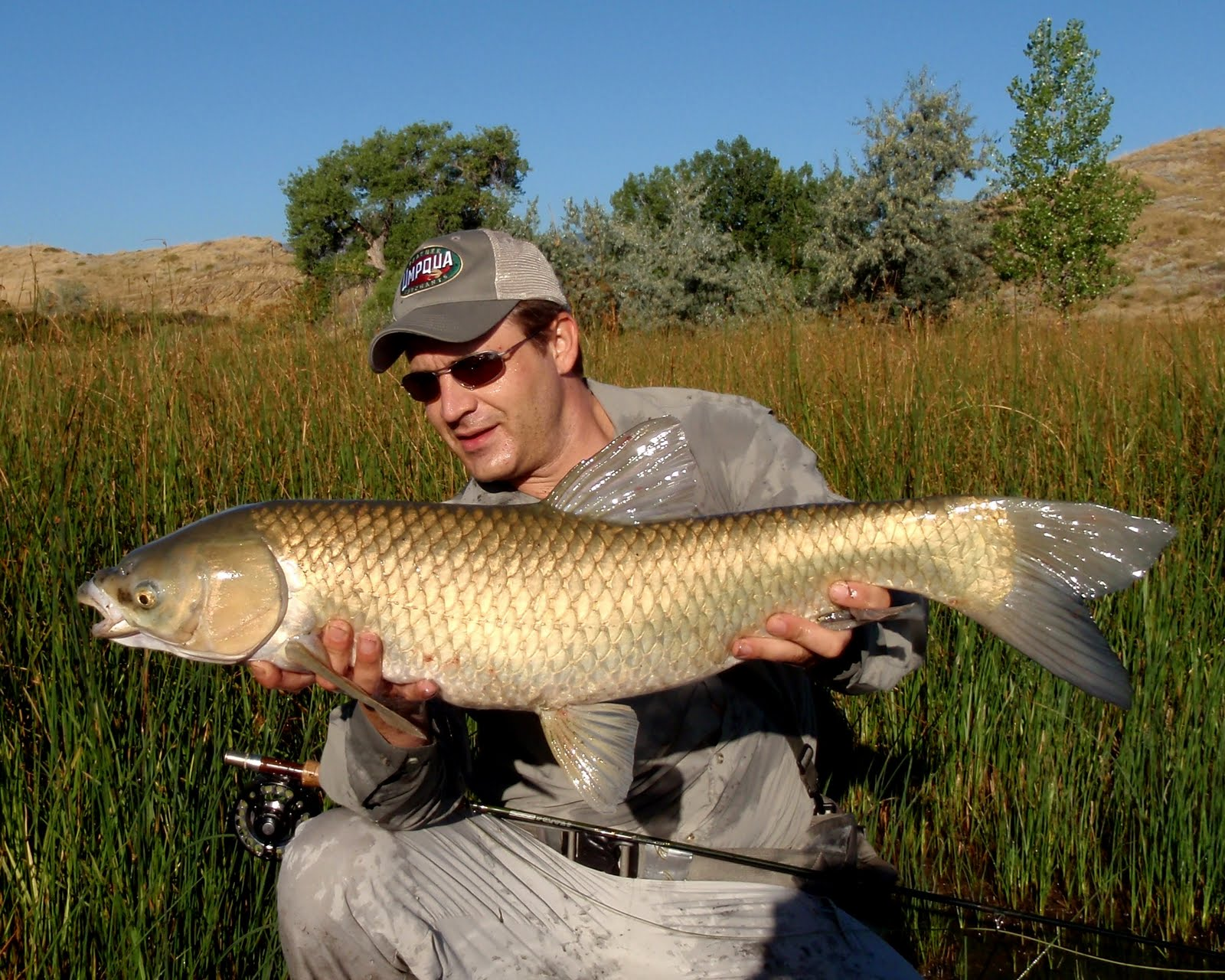 Colorado fly fishing reports fly fishing for carp directory for Fly fishing carp
