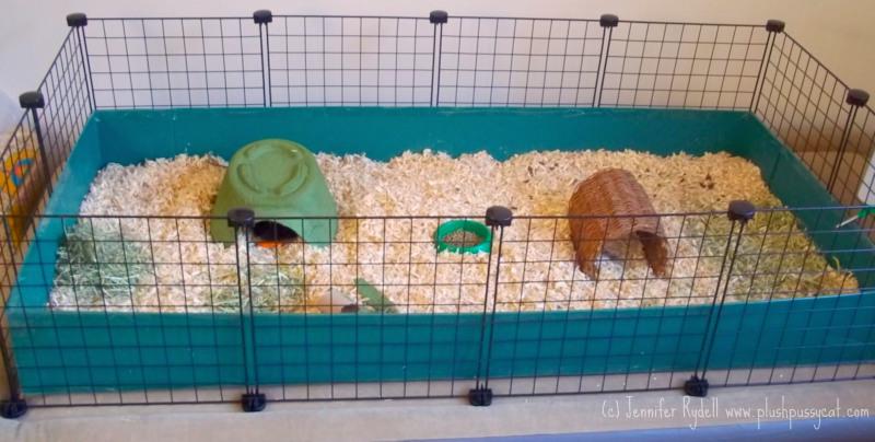 Plushpussycat guinea pig love for Diy playpen for guinea pigs