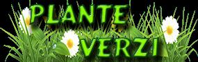 Plante de interior si nu numai