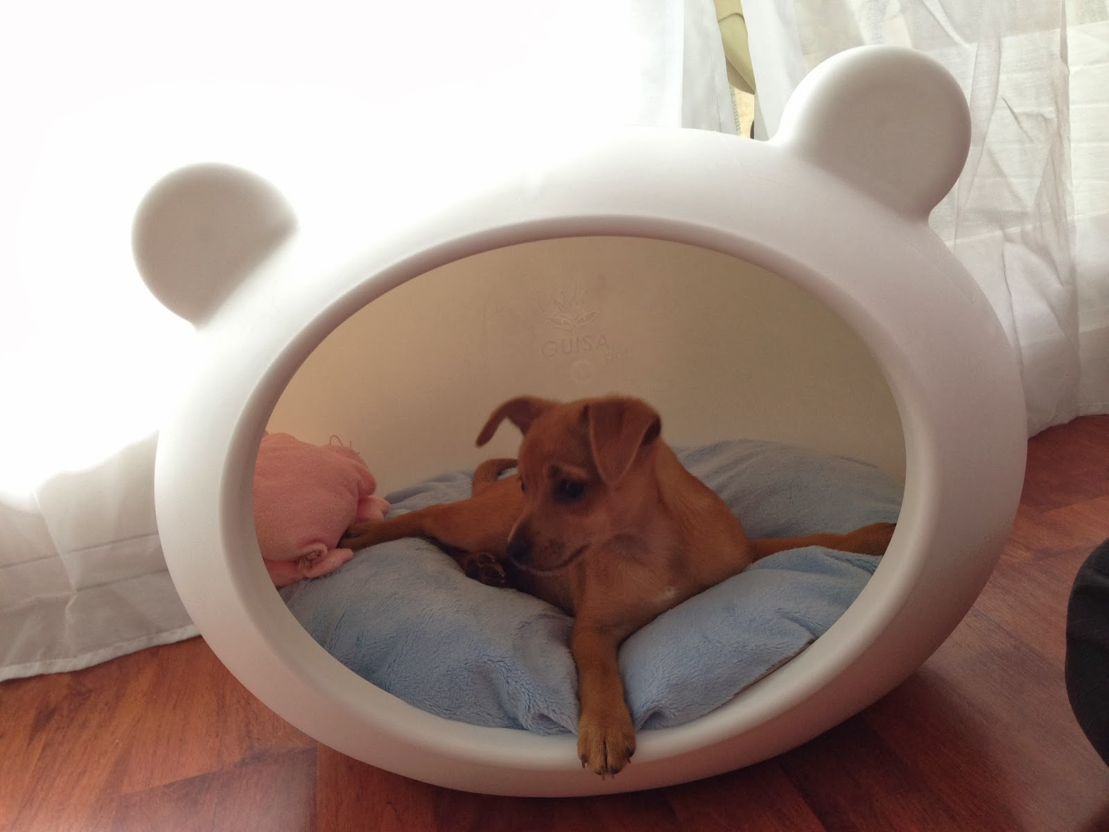 guisapet creative beds for cats and dogs