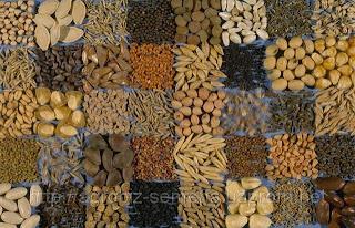 Де купити насіння/Где купить семена