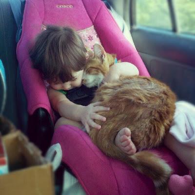 Katze und baby im kindersitz kuschelnd