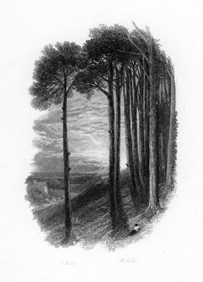 ingraving of a stand of fir trees