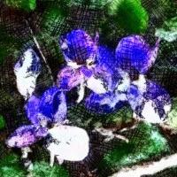 Lliures com les flors (Pep Estany Ferrer)