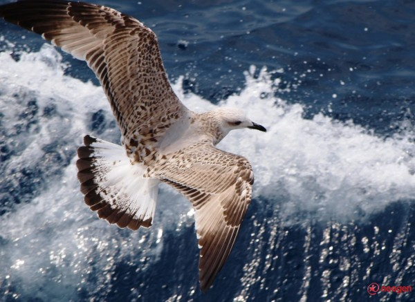 Valuri cu aripi!