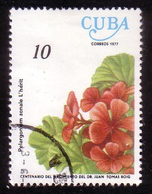 1977 Pelargonium zonale l'herit, Cuba